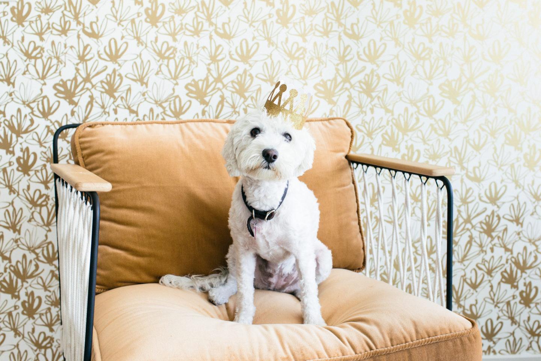 bloguettes-stockthatrocks-dogs-381
